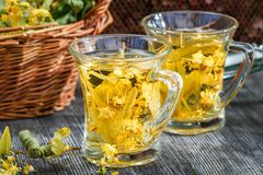 Tea made of lime and honey served in the garden Stock Images