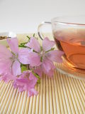 Tea with mallow flowers. Cup of tea with mallow flowers Royalty Free Stock Photography