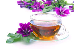 Tea malva. Herbal tea from malva flower Stock Photography