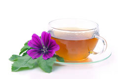Tea malva Royalty Free Stock Photo