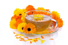 Tea marigold Royalty Free Stock Images