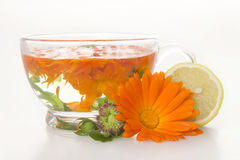 Tea from marigold medical. Royalty Free Stock Photos