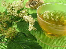 Tea with meadowsweet. Cup of tea with meadowsweet Royalty Free Stock Photo
