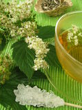 Tea with meadowsweet Stock Photos
