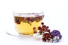 Tea med torkade örtar Arkivfoto