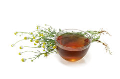 Tea with a medical camomile Stock Images