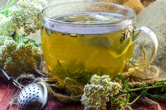 Tea with medicinal herbs Royalty Free Stock Images