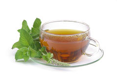 Tea Mentha citrata 01 Stock Photography