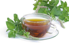 Tea Mentha citrata 03 Stock Images