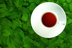 Tea and mint leaves. Royalty Free Stock Images