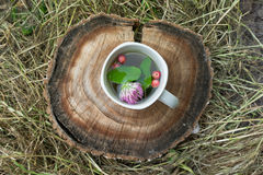 Tea with mint and strawberries in a white cup. Tea with mint and wild strawberries in a white cup on the hay Stock Photo