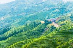 Tea mountian plantation Royalty Free Stock Photos