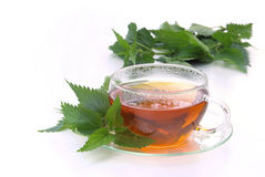 Tea nettle Stock Photography