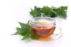 Tea nettle. Herbal tea from stinging nettle stock photography