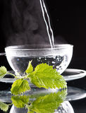 Tea nettle Stock Photos
