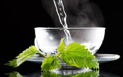 Tea nettle. On the black royalty free stock images