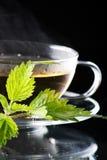 Tea nettle. On the black royalty free stock photo