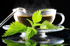 Tea nettle royalty free stock image