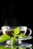 Tea nettle. On the black royalty free stock image