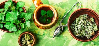 Tea with nettle. Cup of healthy herbal tea with nettle.Raw spring nettle royalty free stock images
