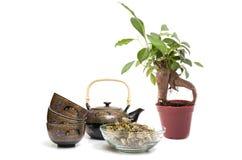 Tea och tree Fotografering för Bildbyråer