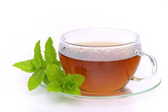 Tea Peppermint Stock Photography