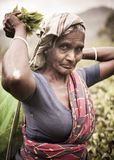 Tea picker's arms raised concept Royalty Free Stock Photos
