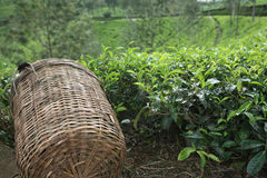 Tea picker's basket Stock Images