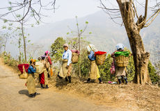Tea pickers of darjeeling stock images