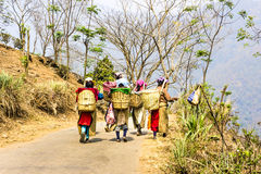 Tea pickers of darjeeling Royalty Free Stock Image