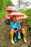 Tea pickers, Darjeeling, India royalty free stock photo