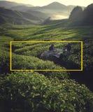Tea pickers at dawn Agricultural Environmental Concept Royalty Free Stock Photos
