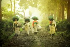 The tea picking farmers came home after taking tea leaves in the fields. Wonosari Lawang East Java January 21, 2019 stock images