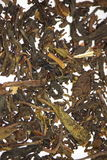 Tea. Pile of Dried tea leaves Stock Images