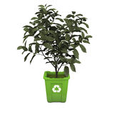 Tea plant in recycle bin Stock Photos
