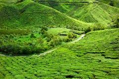 Tea plantation. Beautiful green hills on a tea plantation in Malaysia Stock Photography