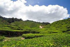 Tea plantation. Against dynamic cloudy sky in the Cameron Highlands, Malaysia Stock Photos