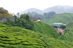 Tea plantation. A hill side tea plantation Stock Photography