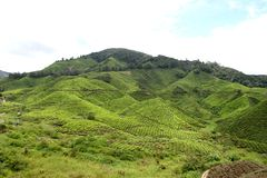 Tea Plantation 7 Royalty Free Stock Photos