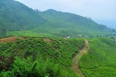 Tea plantation area by the mountain Stock Images