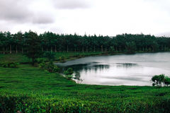 Tea plantation around a lake. With cloudy weather in Mauritius stock photo