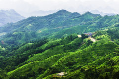 Tea plantation around the  mountains in China Royalty Free Stock Photos