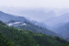 Tea plantation around the  mountains Stock Photo