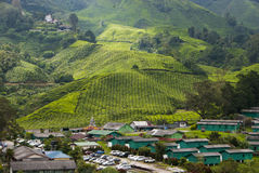 Tea Plantation, Cameron Highland Malaysia. Home and factory building at bottom valley of tea plantation, Cameron Highland Royalty Free Stock Photo