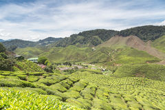 A tea plantation in the Cameron Highlands Royalty Free Stock Images