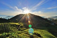 Tea Plantation, Cameron Highlands, Pahang, Malaysia. Stock Photos