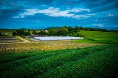 Tea plantation Cameron highlands Royalty Free Stock Photos