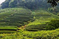 Tea plantation in China Stock Photos