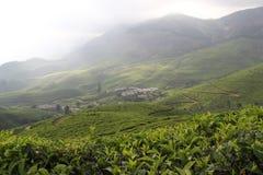 Tea plantation on cloudy mountain Stock Photography
