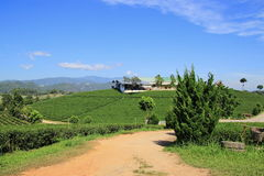 Tea plantation and the factory Stock Photography
